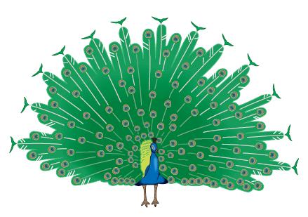 Peacock Montessori Nursery's logo