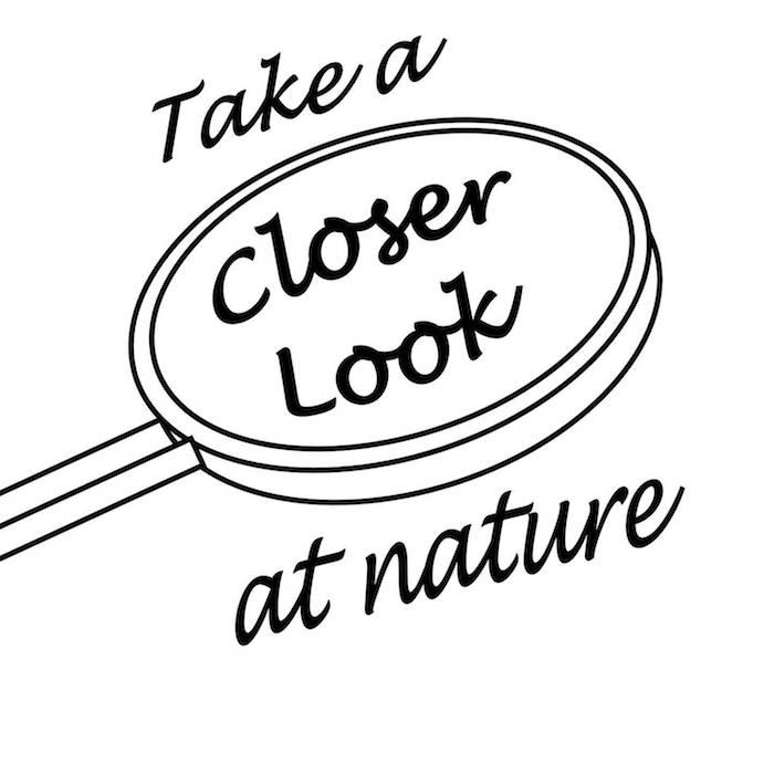 Closer Look at Nature's logo