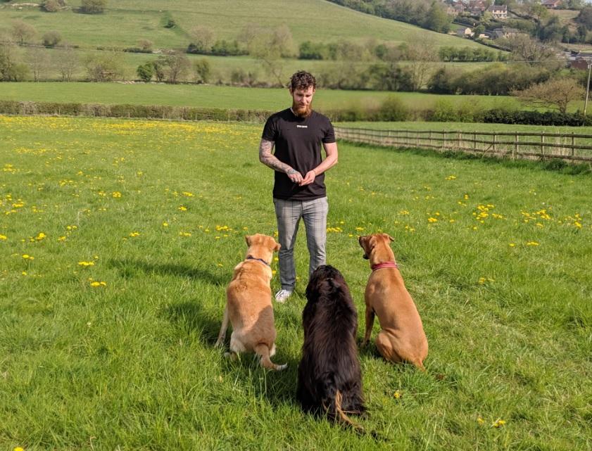 One Dog Training's main image